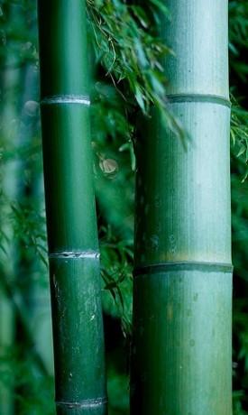 Bamboo - Shiatsu Massage